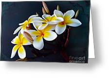 Plumeria Bouquet 2 Greeting Card