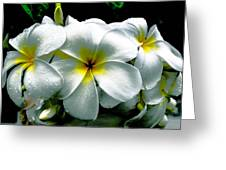 Plumeria Bunch Greeting Card