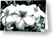 Plumeria Bunch No Color Greeting Card by Lisa Cortez
