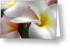 Plumeria Dance Greeting Card