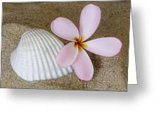 Plumeria Flower And Sea Shell Greeting Card