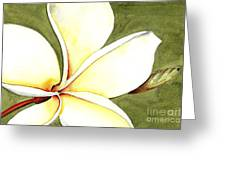 Plumeria Flower Greeting Card