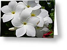 Plumeria Flowers Greeting Card