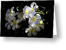 Plumeria Glow Greeting Card
