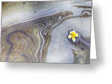 Plumeria In Oil Slick- Uss Arizona Memorial Shipwreck Site Greeting Card