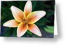 Plumeria Greeting Card
