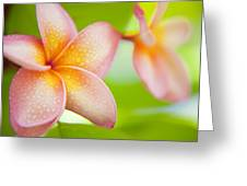 Plumeria Pastels Greeting Card