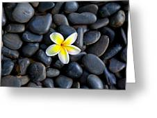 Plumeria Pebbles Greeting Card