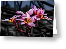 Plumeria Rainbow Ali Greeting Card