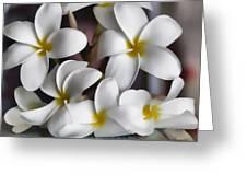 Plumeria The Pretender Greeting Card
