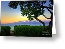Plumeria Sunrise Greeting Card