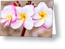 Plumerias Of Paradise 10 Greeting Card