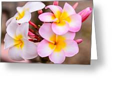 Plumerias Of Paradise 12 Greeting Card