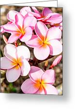 Plumerias Of Paradise 2 Greeting Card