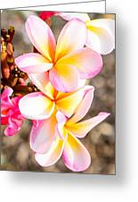 Plumerias Of Paradise 4 Greeting Card