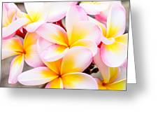Plumerias Of Paradise 6 Greeting Card