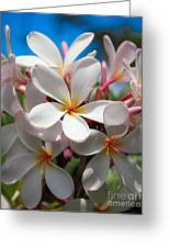 Plumerias Under A Blue Sky Greeting Card