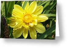 Pocketful Of Sunshine Greeting Card