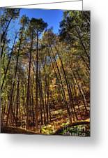 Pocono Trees Greeting Card