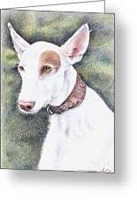 Podenco Ibicenco Greeting Card