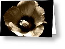 Poetic Shadows Greeting Card