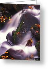 Poetry In Motion - 290 Greeting Card by Paul W Faust -  Impressions of Light