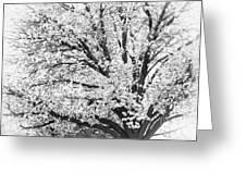 Poetry Tree Greeting Card