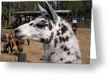 Polka Dot Llama Pogo Rules Greeting Card