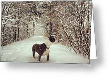 Pogo's First Snow Day Greeting Card