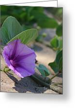Pohuehue - Pua Nani O Kamaole Hawaii - Beach Morning Glory Greeting Card