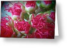 Pohutukawa Tree Flowers Greeting Card