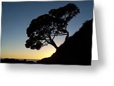 Pohutukawa Trees At Sunrise Greeting Card
