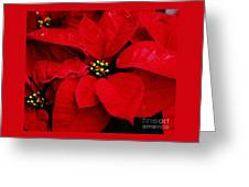 Poinsettia # 2 Greeting Card