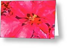 Poinsettia 1 Greeting Card