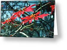 Poinsettia Africa Greeting Card