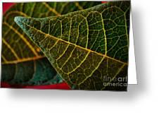 Poinsettia Green Leaf Greeting Card