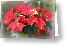 Poinsettia In Red And White Greeting Card