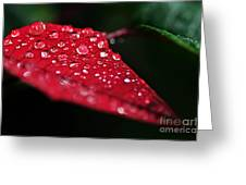 Poinsettia Leaf With Water Droplets Greeting Card