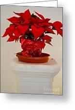 Poinsettia On A Pedestal No 1 Greeting Card