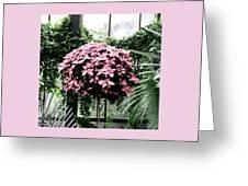 Poinsettia Tree Longwood Gardens Greeting Card