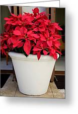 Poinsettias In A Planter Greeting Card