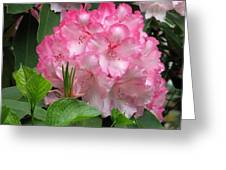 Point Defiance Truss Greeting Card