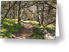 Point Lobos Cypress Path Greeting Card