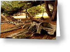 Point Lobos Whalers Cove Whale Bones Greeting Card by Barbara Snyder