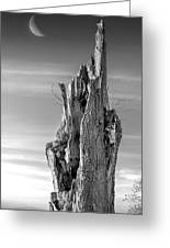 Pointing To The Heavens - Bw Greeting Card