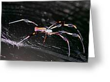 Points Of Contact - Spider - Orb Weaver Greeting Card