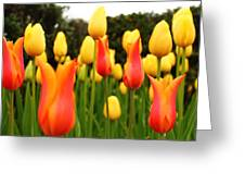 Pointy Tulips Greeting Card