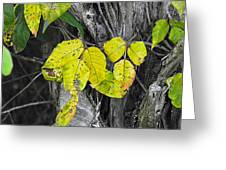 Poisin Ivy 2 Greeting Card