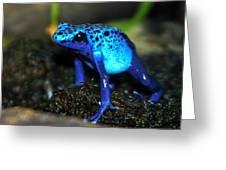 Poison Blue Dart Frog Greeting Card