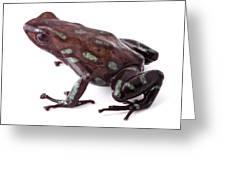 poison dart frog Panama Greeting Card